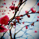 小さな新春の香りの漂い季節〜 ♪♫