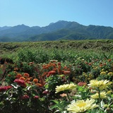 自然栽培で美味しい野菜作りに挑戦中「白州おとなの里山塾」からのお便り