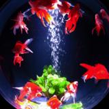 すみだ水族館「お江戸の金魚ワンダーランド」でお江戸のアリス気分♪日本を味わいたい方必見スポット!