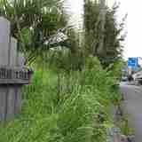 千葉県の最南端 !! 太陽の恵みを贅沢に受けた野菜を育てる「南房総太陽農園」さんを取材してきました。