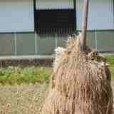 どうして最近、稲刈り後の乾燥で、天日干しの光景をみるようになったの?