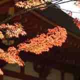 世界遺産に登録されている毛越寺で、紅葉を愛でてみませんか?(紅葉狩り)