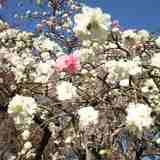 「季節のお花見スポット」深大寺☆植物公園で季節のお花見♪