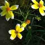 「季節のお花見スポット」京王多摩川☆フローラルガーデン アンジェで季節のお花見